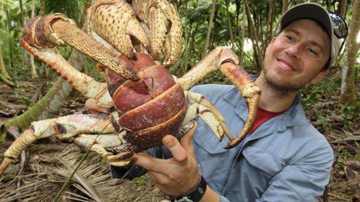 Coconut Crab: The Horrifying Behemoth Of Tropical Islands