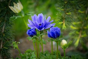 feature blue flowers