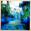 Blue Floors