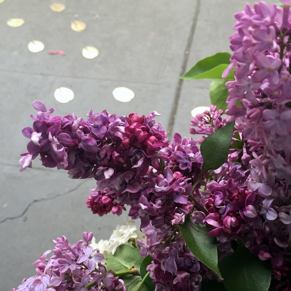 lilacs_2818