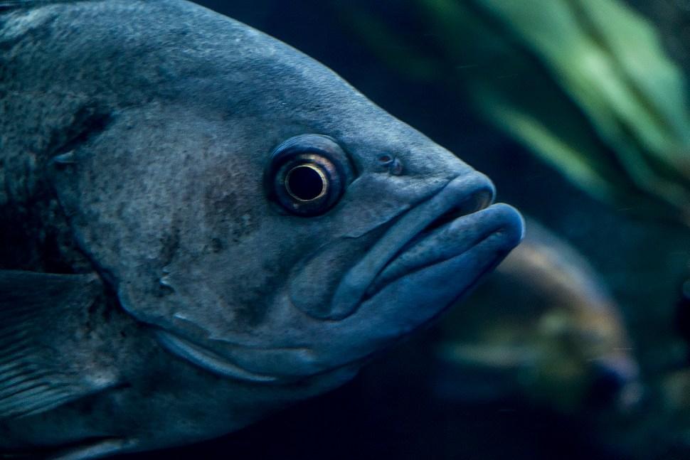 fish_DSCF0685