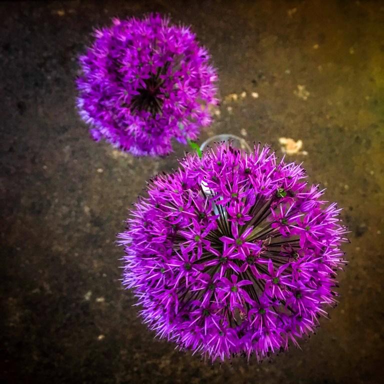 flowers_IMG_4950