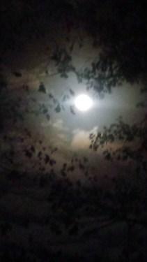 moon-nov-14-2016-b
