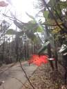 Leaf along Gainesville-Hawthorne Trail