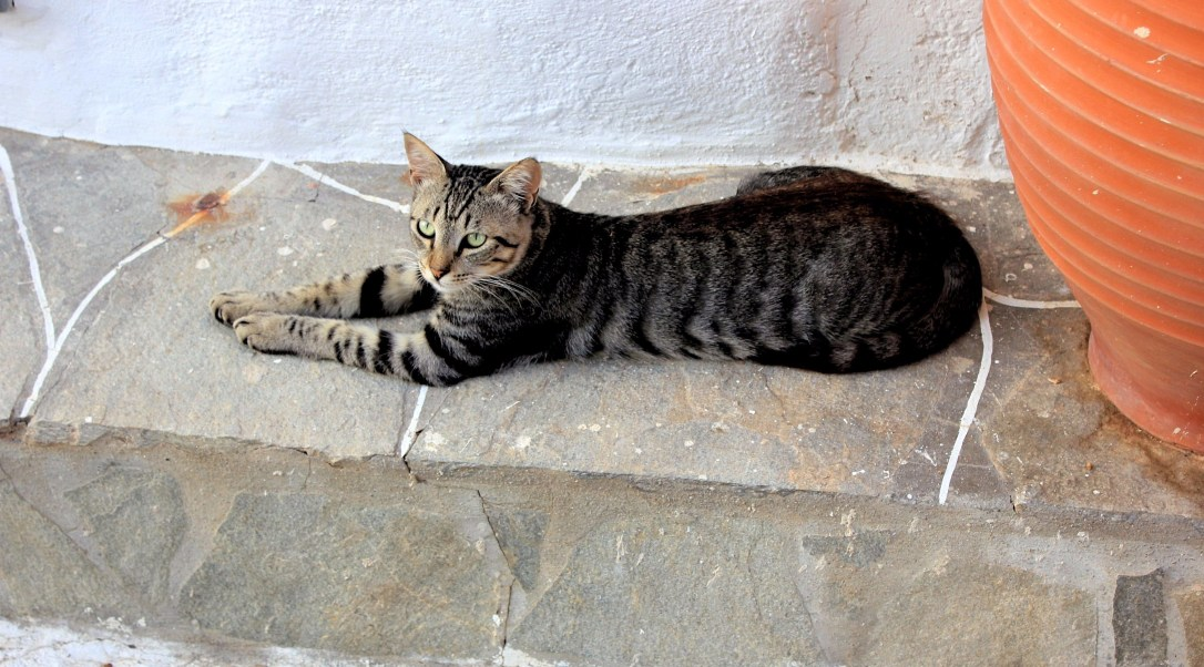 cats of sifnos greece