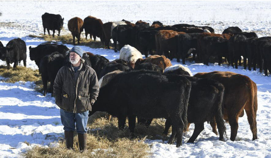 Minnesota farmer, distributor raises beef to improve soil