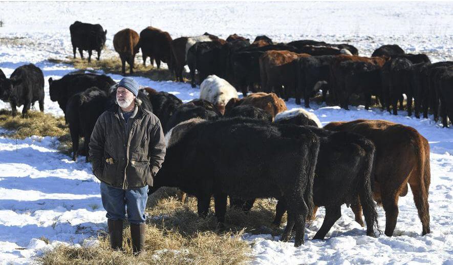 Minnesota farmer, distributor raises beef to improve soil
