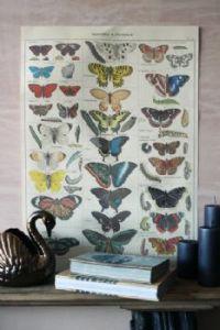 cavallini-co-quality-gift-wrap-butterfly-design-2-18201-p[ekm]233x349[ekm]