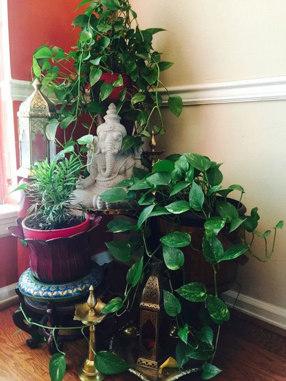 Decorating Plants Indoor The Indian Way Fashion In