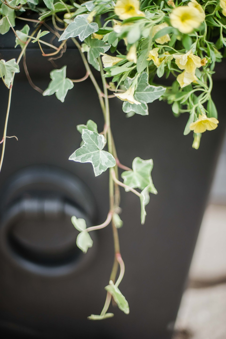 How to make a Summer Planter