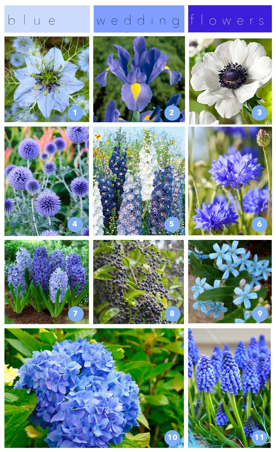 Blue Flowers - Blue flowers for weddings - Blue Flowers for Bouquets