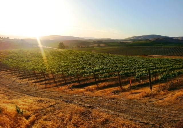 vineyard image with good sunlight