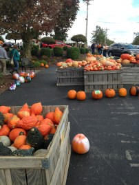 Who doesn't love gourds??? Especially the ugly ones--they are the cutest.