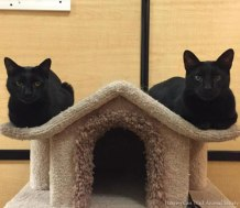 Adoptable Stumble and Halle