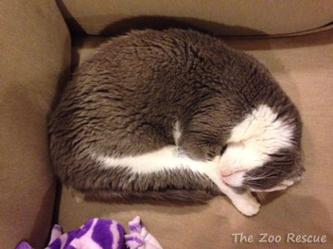 Sophie - The Zoo Rescue