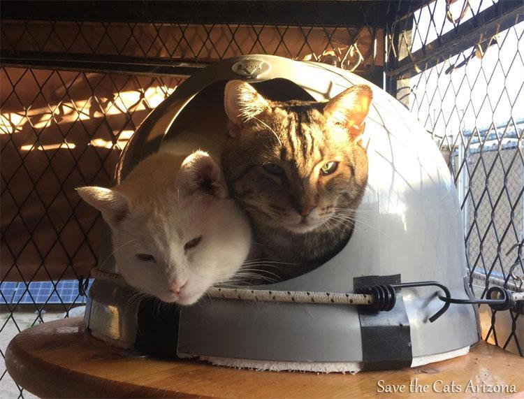 Save the Cats Arizona