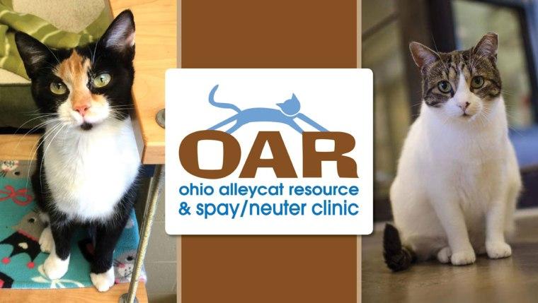 Ohio Alleycat Resource