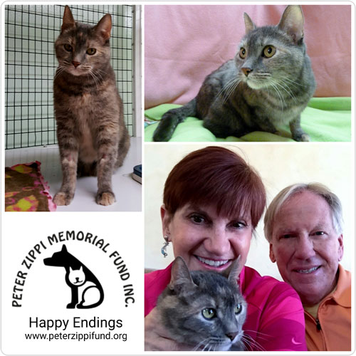 three pictures of tabby cat who was adopted