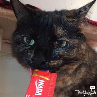 tortie cat licking cat treat