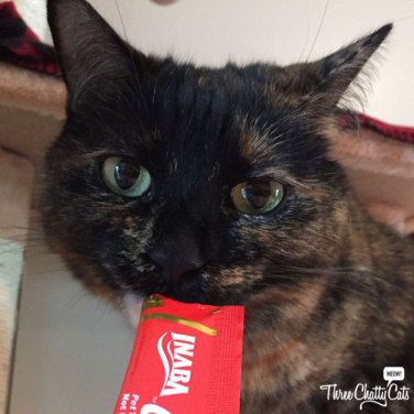 tortie cat eat cat treat