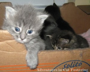 kittens in a cardboard box
