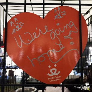 """""""we're going home"""" sign"""