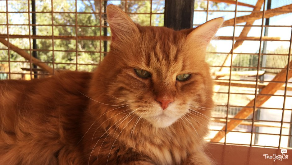 Ginger cat at Best Friends Animal Sanctuary
