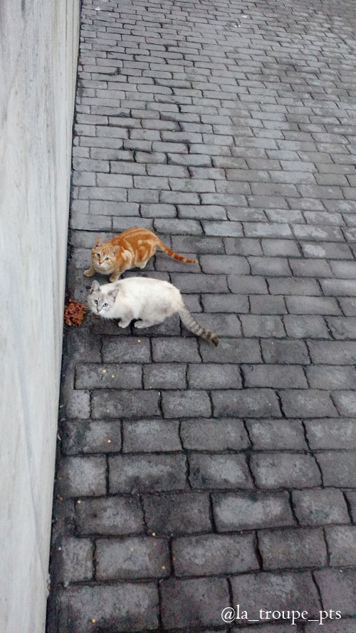 two feral cats eating