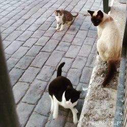 three feral cats