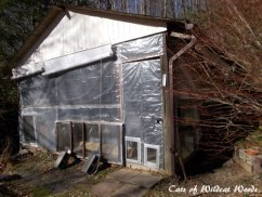 screened porch for cats