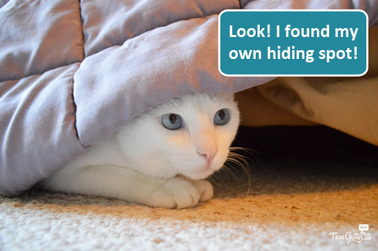 sophie-hiding