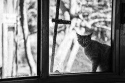 shelter photography, sabrina_boem_photography