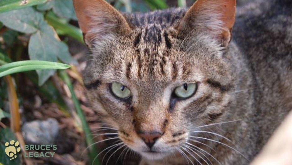 Jgf S Cat Pawsitive Initiative