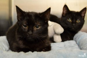 Two black kittens at Best Friends - Los Angeles