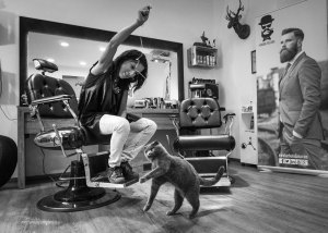 "Barbershop cat Matisse | ""C-AT WORK"" by Marianna Zampieri"