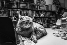 "Stationery shop cat Leo | ""C-AT WORK"" by Marianna Zampieri"