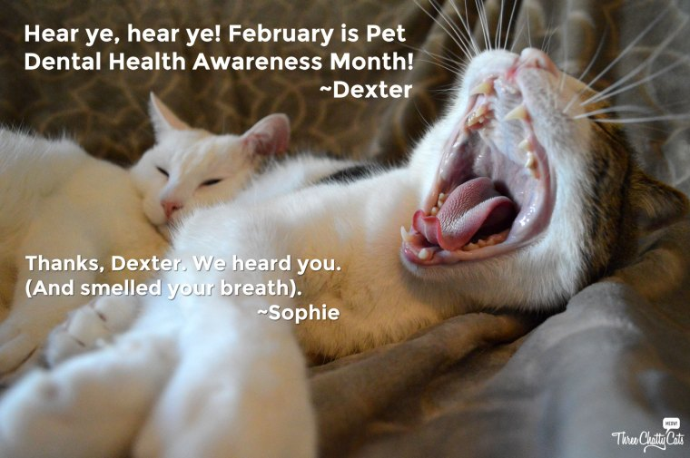 Pet Dental Health Awareness Month