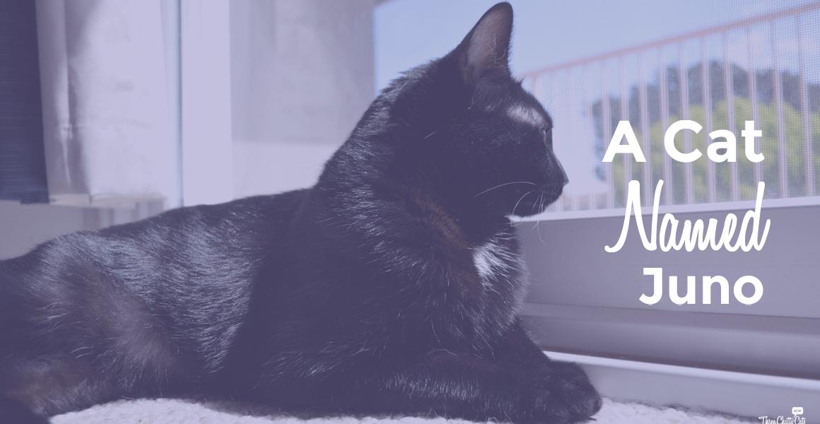 A Cat Named Juno