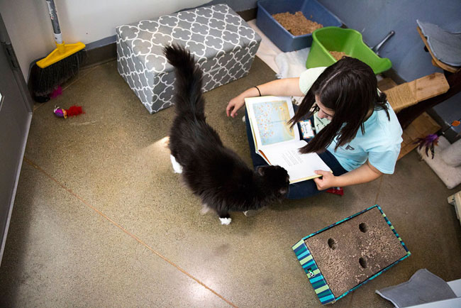 "volunteer reading to shelter cat | ""Shelter Me: Community Matters"""