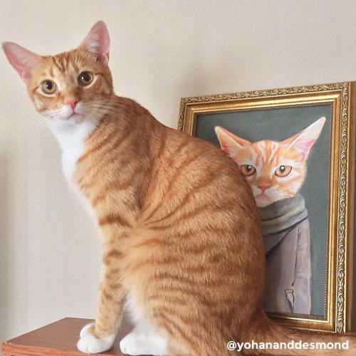 Yohan, ginger cat