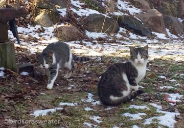 two tabby cats in colony