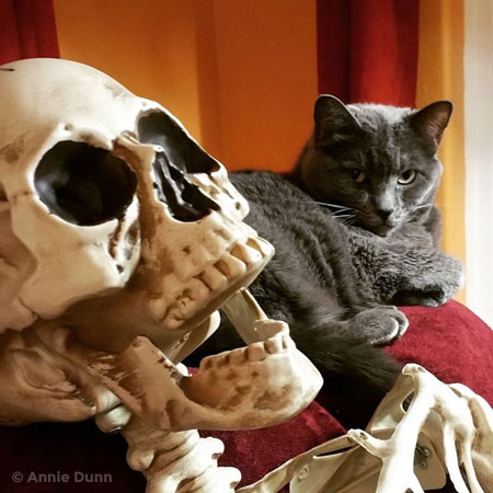gray cat with skull | Annie Dunn