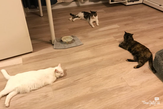 Three cats in a meeting