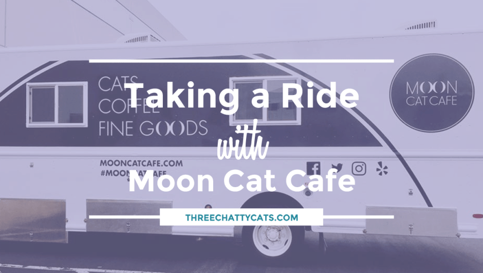 Taking a Ride with Moon Cat Cafe