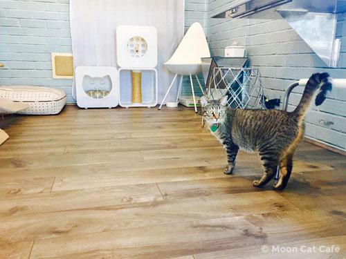 cat inside Moon Cat Cafe