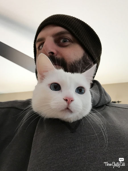 white cat with man