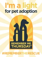 i'm a light for pet adoption