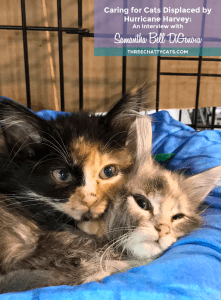 two rescued kittens after hurricane harvey