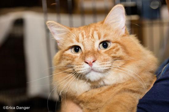 orange-cat.jpg