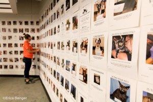 wall of pet photos